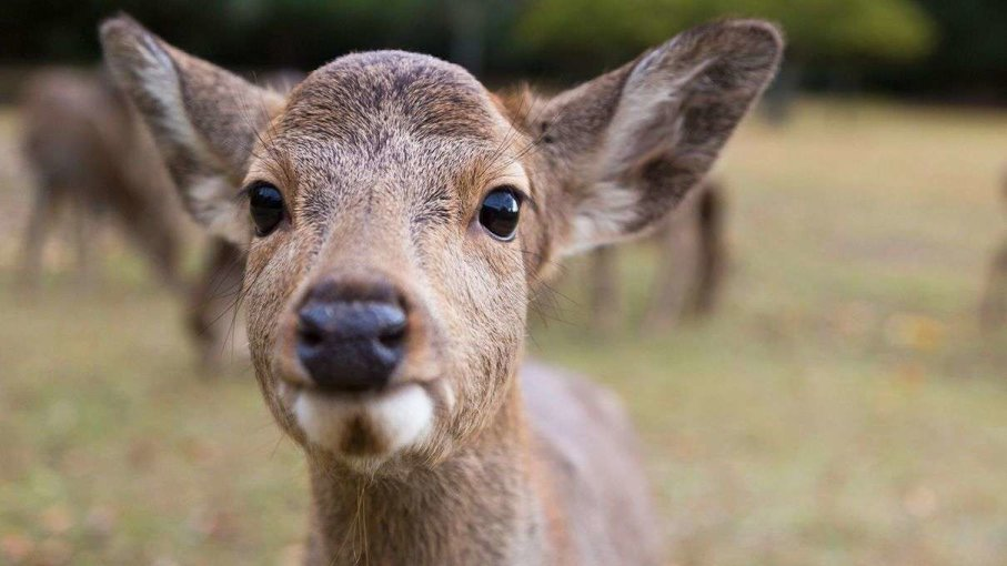 Cute and Funny Deer Names
