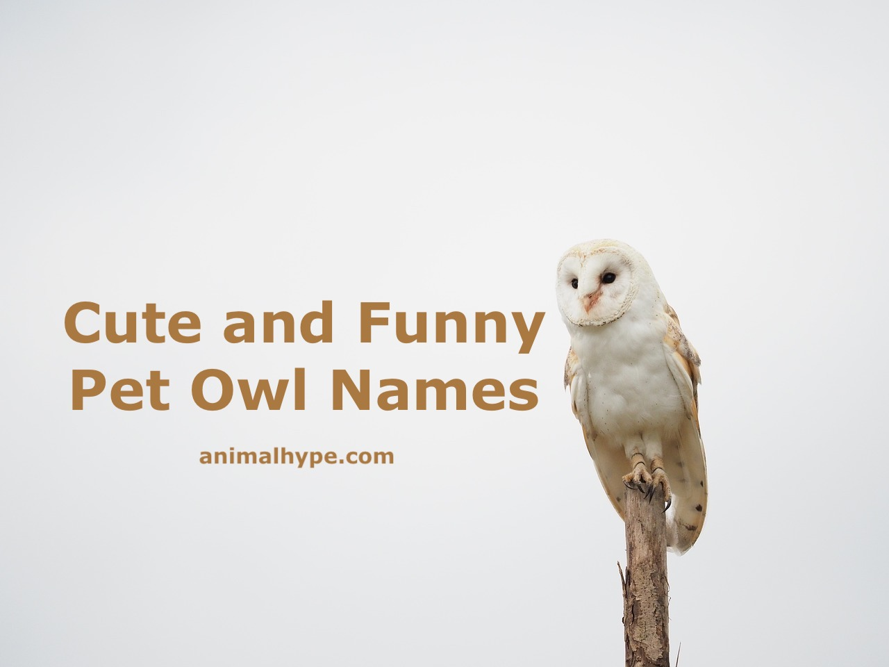 Cute and Funny Owl Names