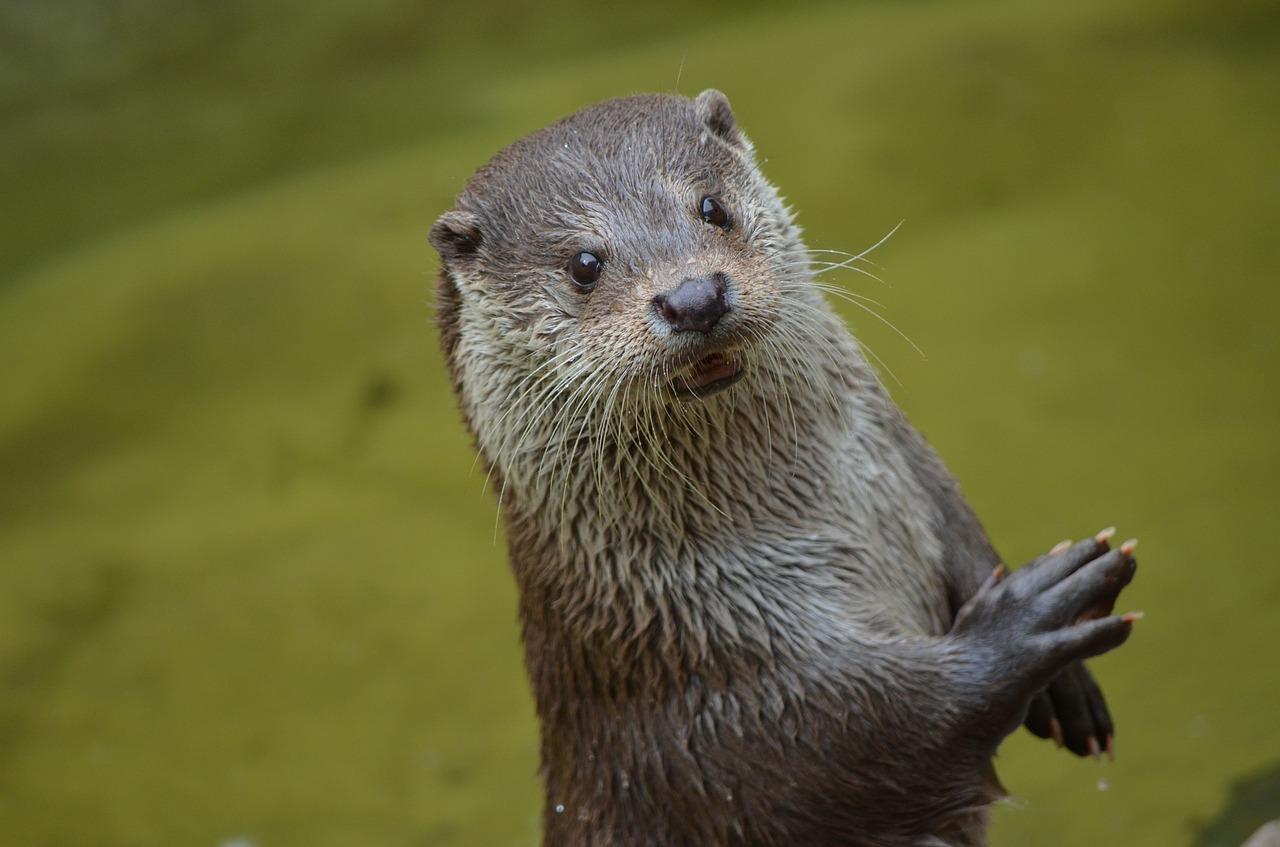 Otter Names
