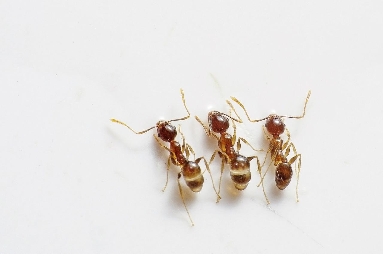 Do Ants Sleep