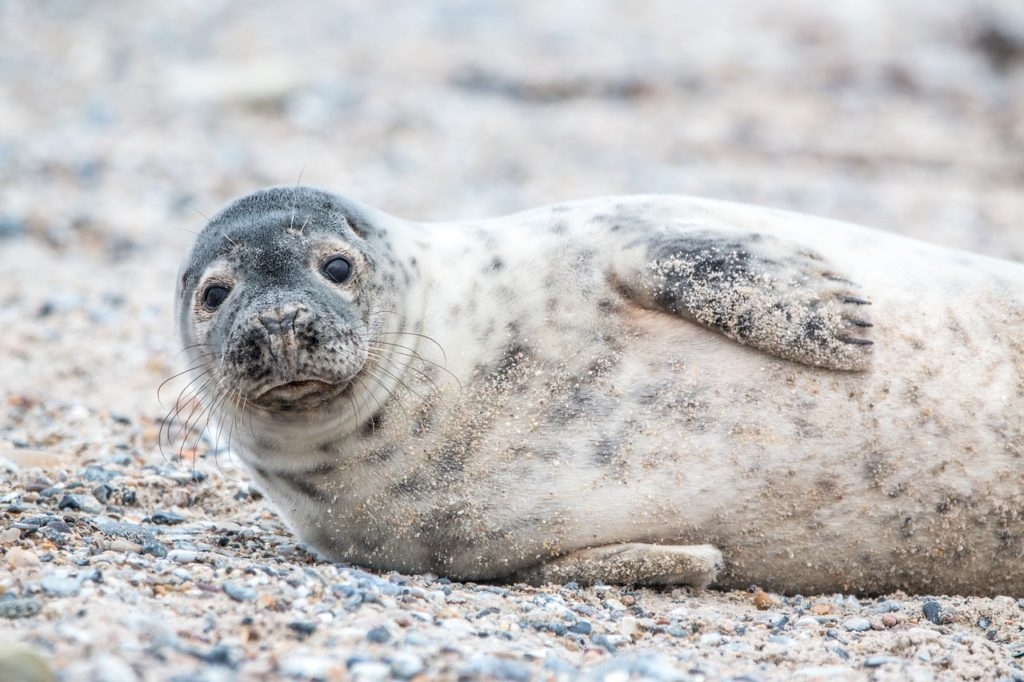 136 Famous And Cute Seal Names Animal Hype