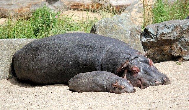 Female Hippo Names