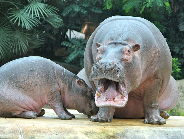 Funny Male Hippo Names
