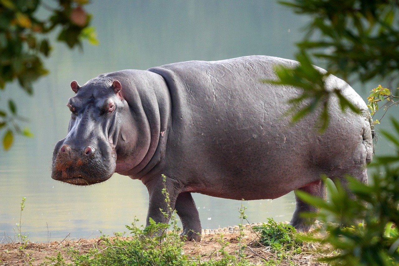 Funny and Cute Hippo Names