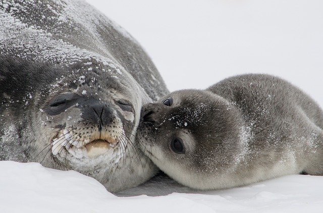 Seal names from cartoons and movies