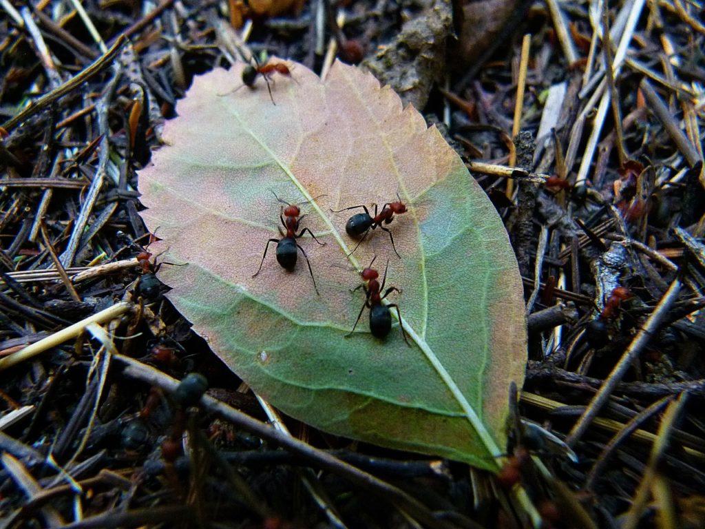 When Do Ants Sleep