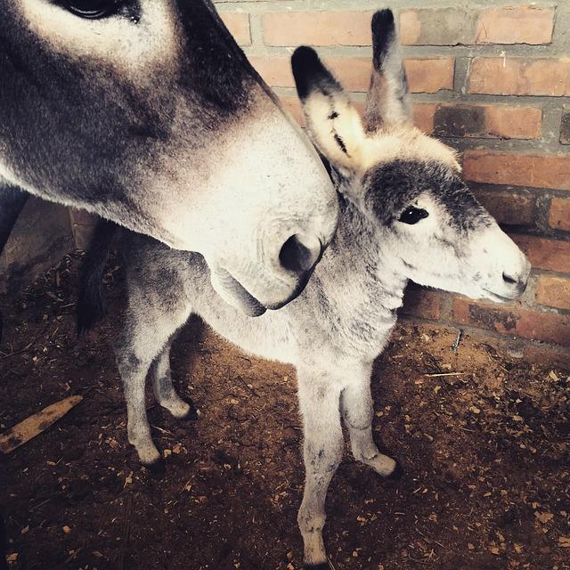 Cute Baby Donkey