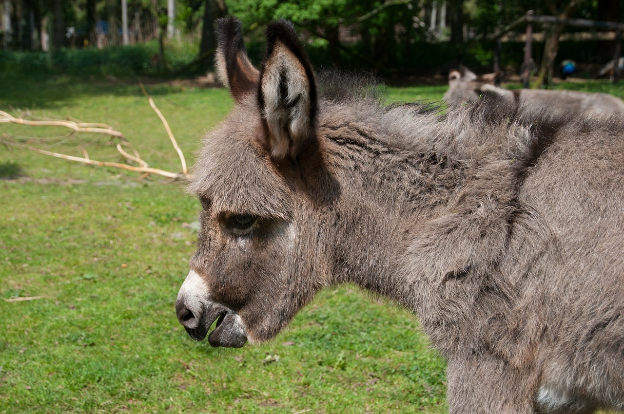 Cute and Funny Baby Donkey