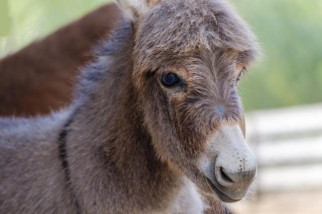 Friendly Baby Donkey