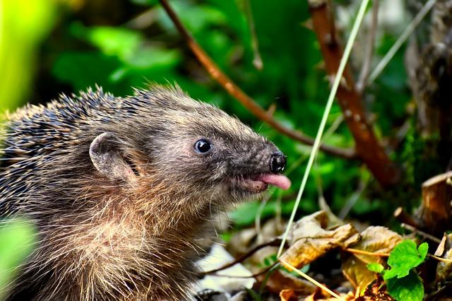 Funny Hedgehog Names