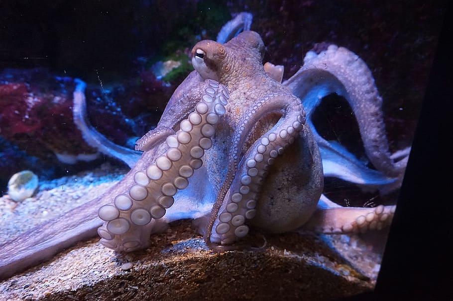 squid names