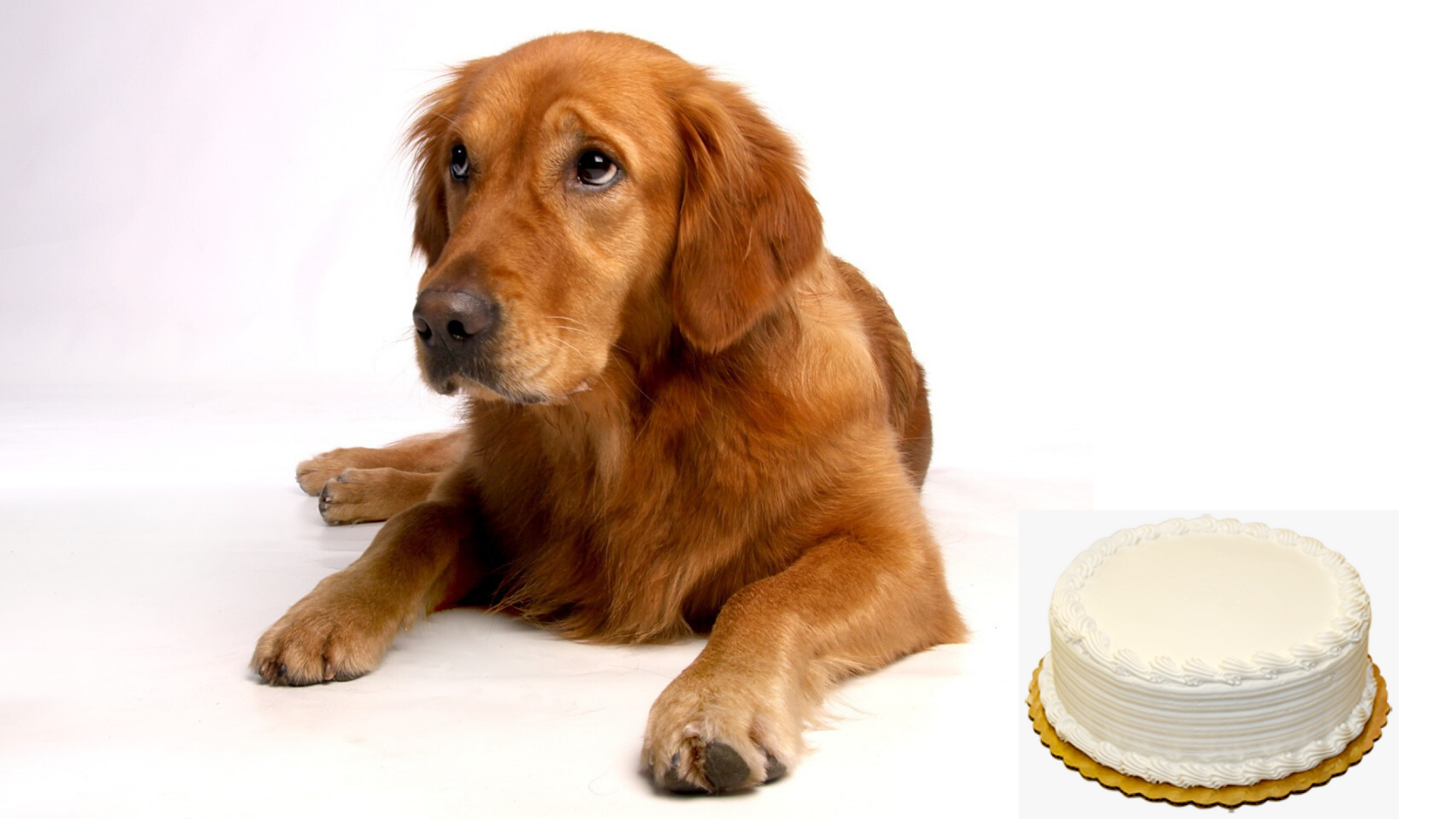 Can Dogs Eat Vanilla Cake