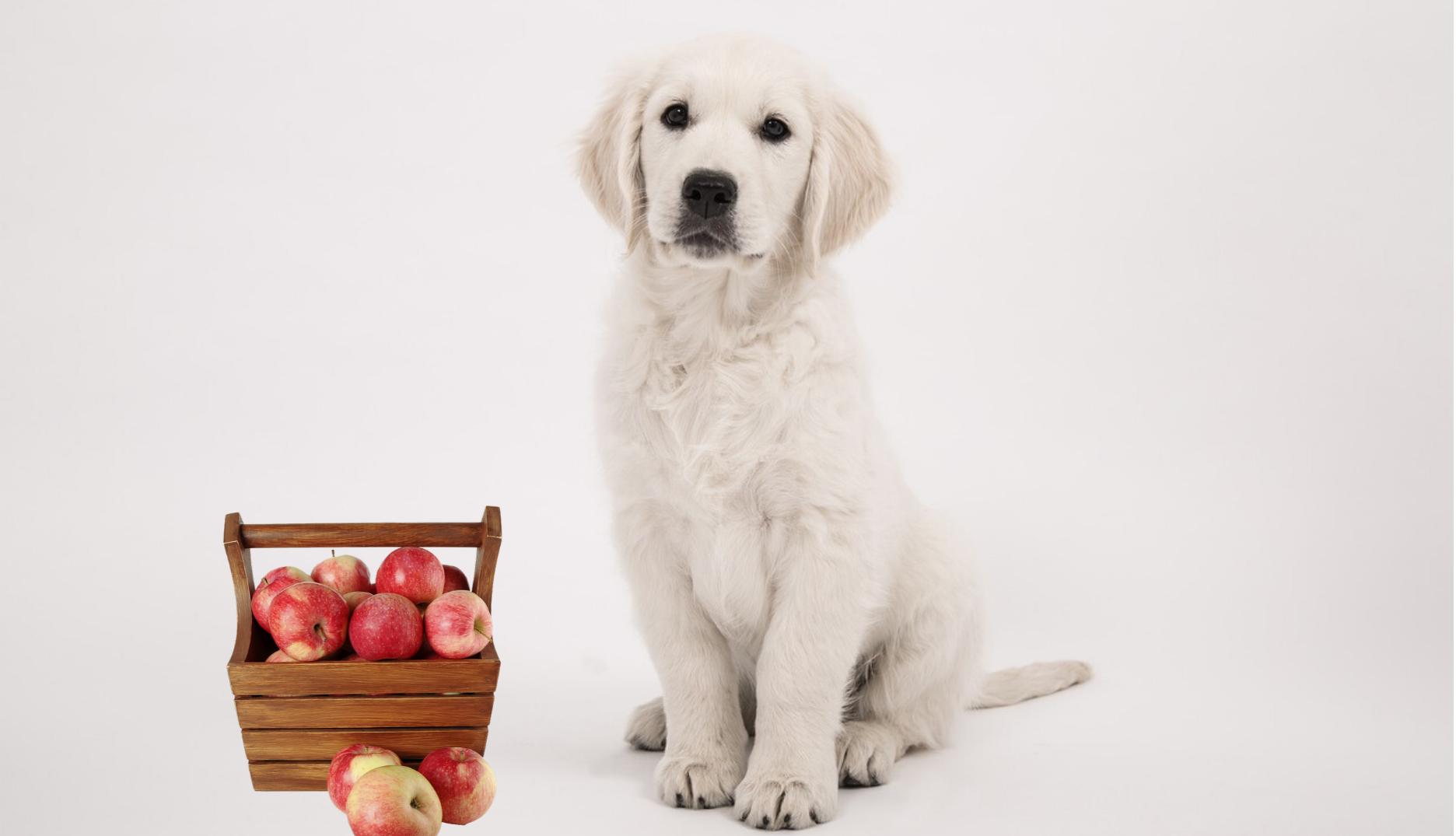 Can golden retrievers eat apples