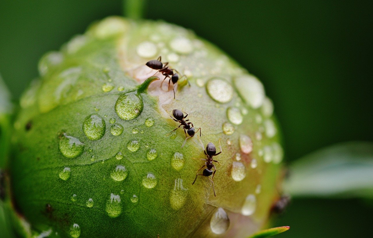 Do Ants Drink Water