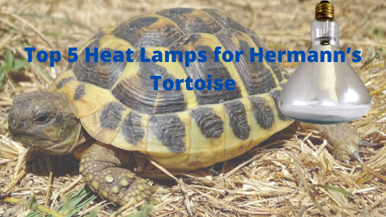 Top 5 Heat Lamps for Hermann's Tortoise