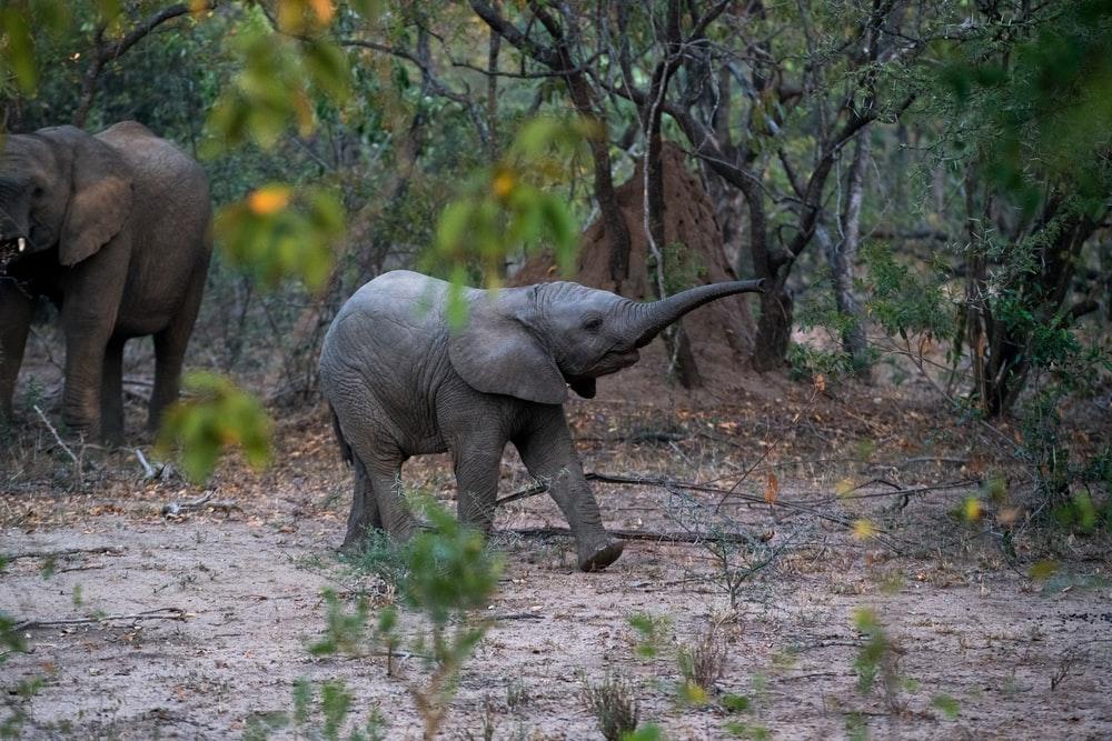 baby elephant names