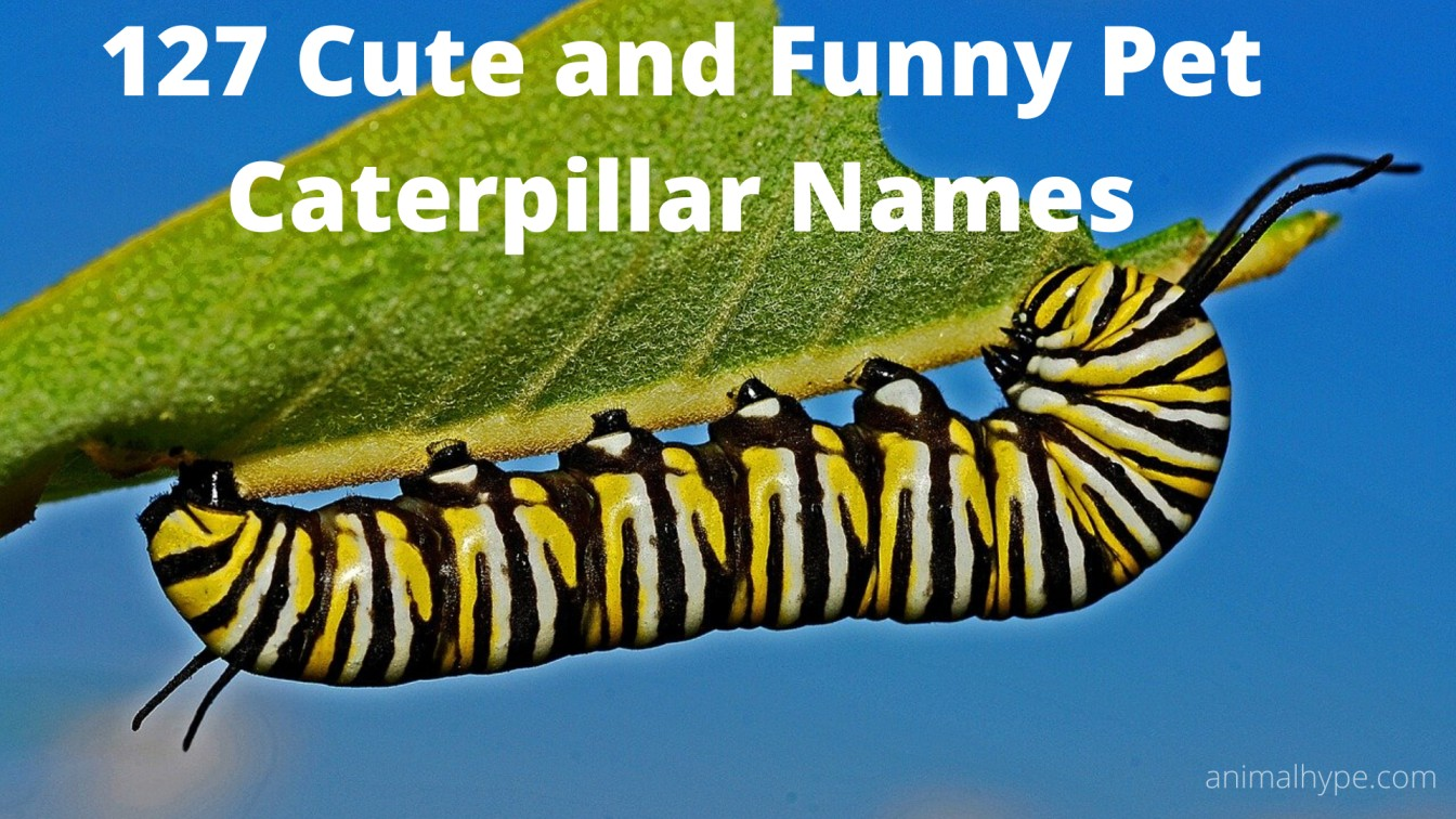 Cute and Funny Pet Caterpillar Names