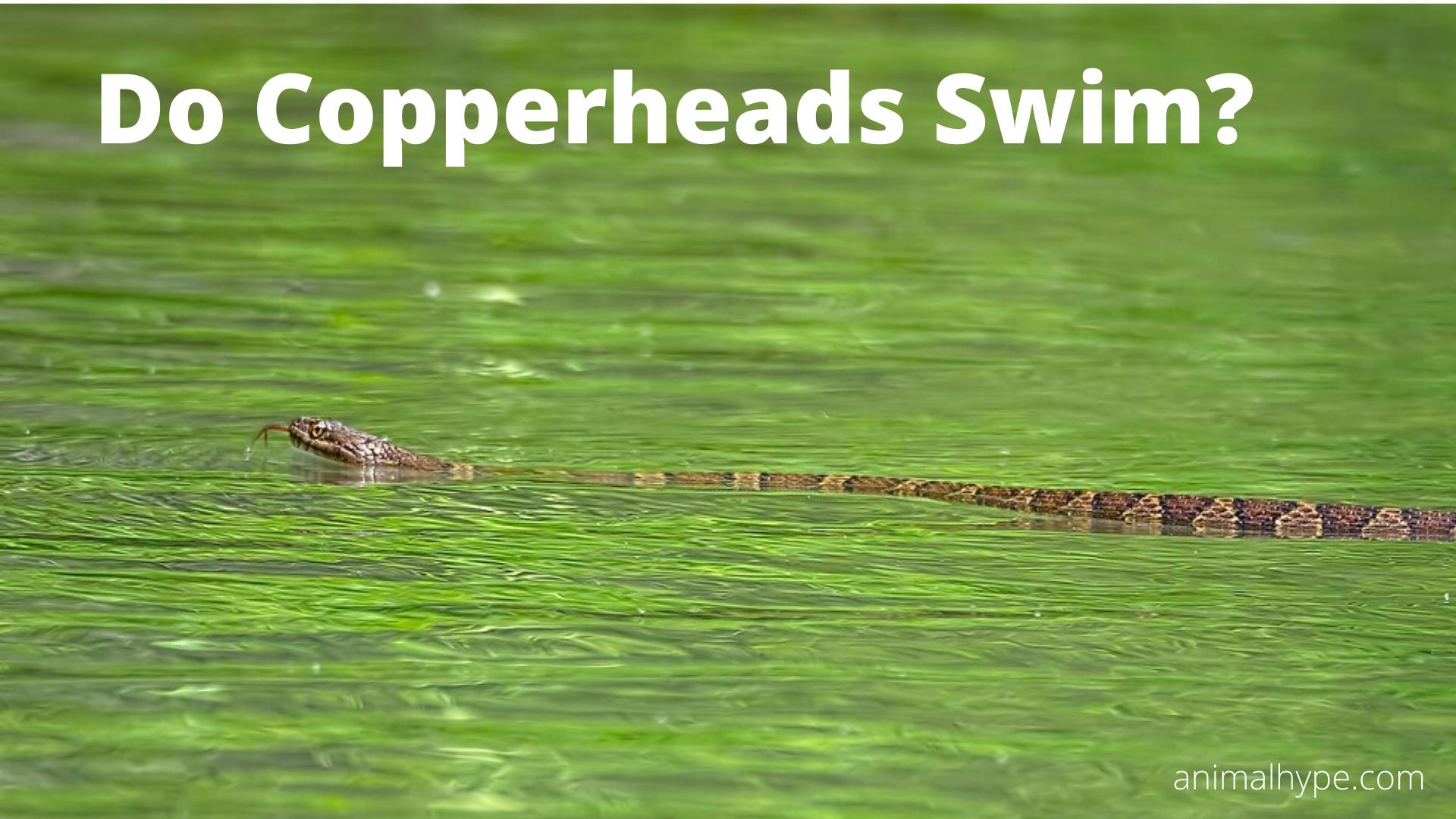 Do Copperheads Swim