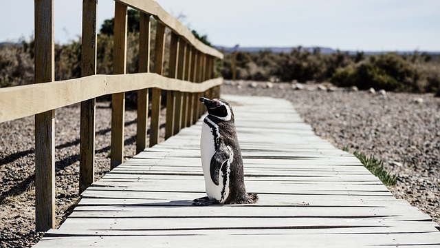 Funny Baby Penguin