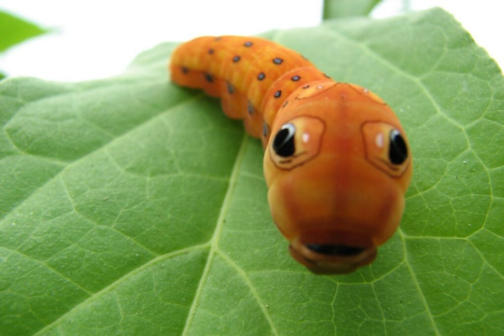 Funny caterpillar names