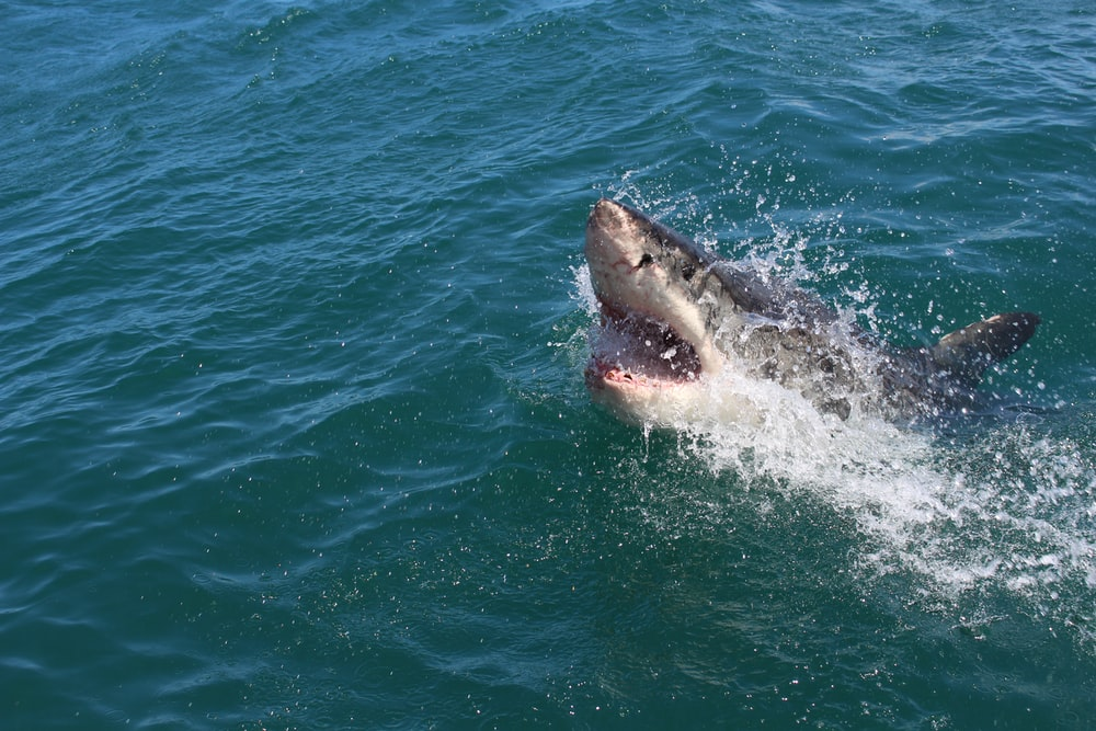 Shark Names