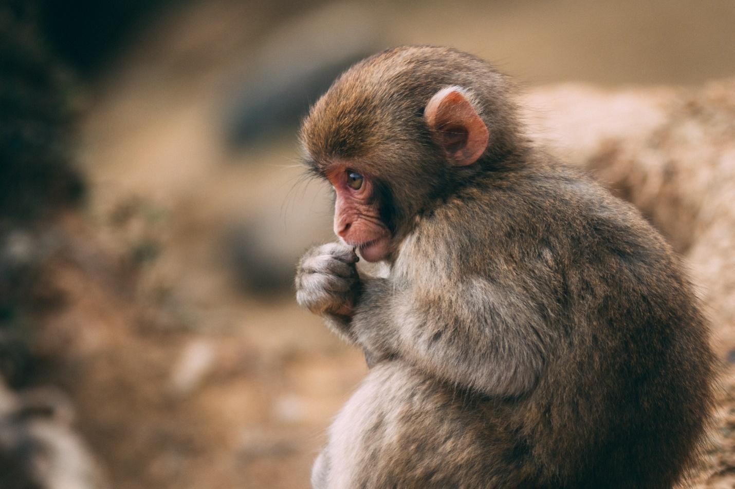 monkey names