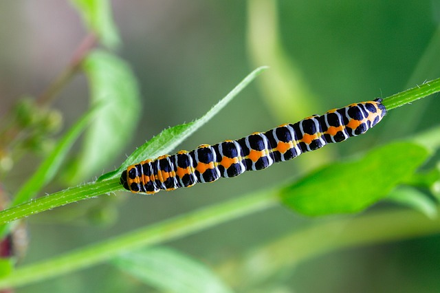 Cool caterpillar names