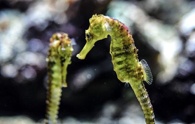 Cool seahorse names