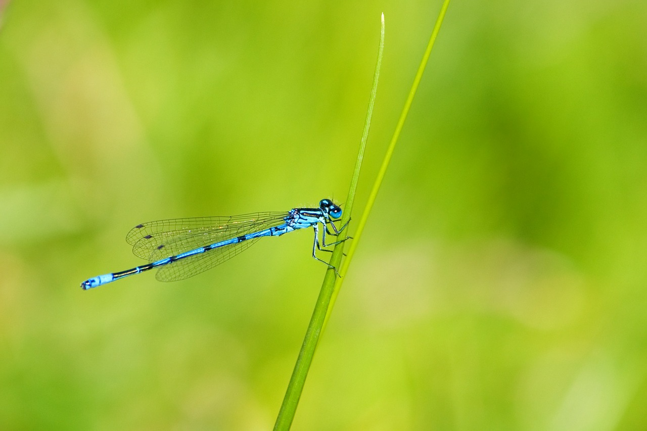 Dragonfly Names