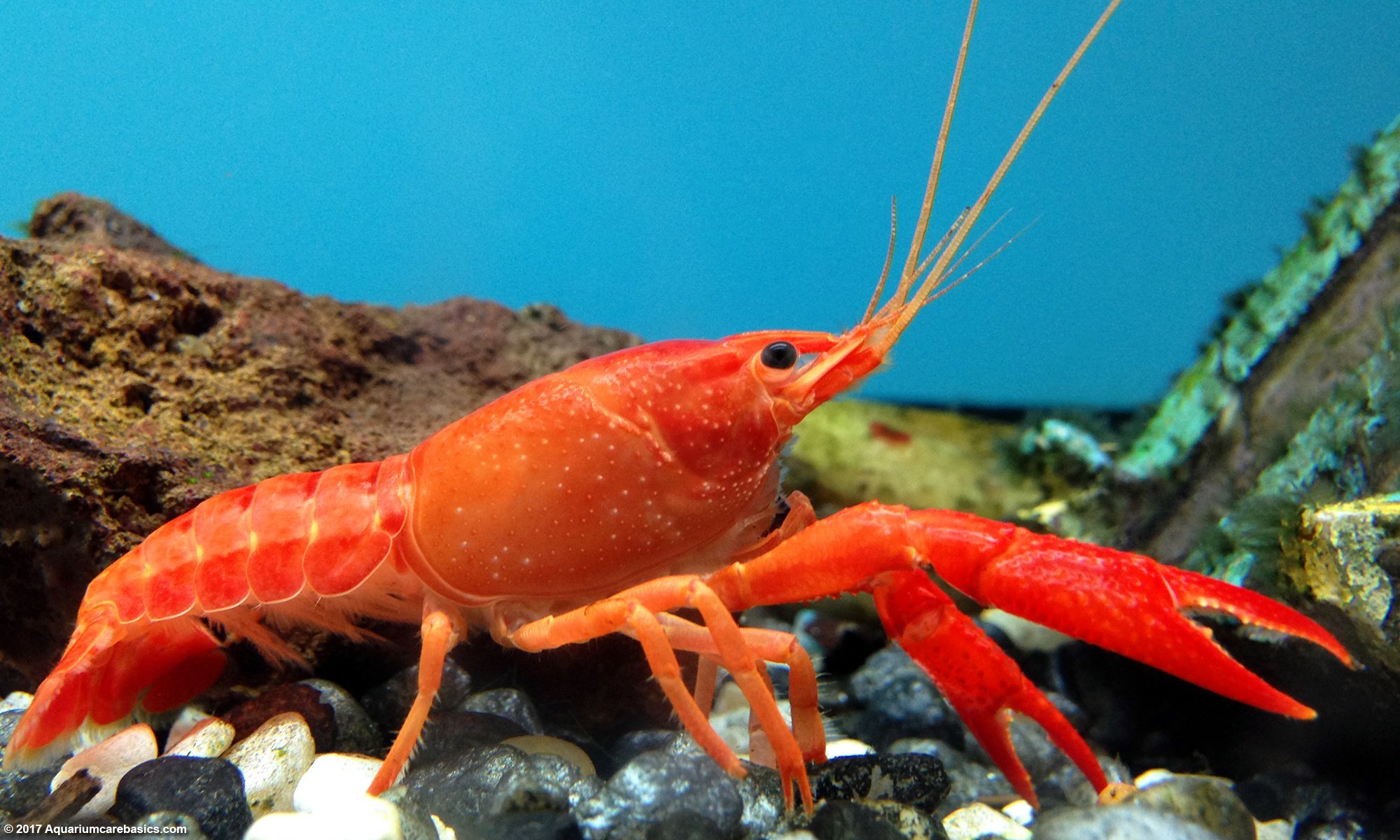 Cute and Funny Pet Lobster Names