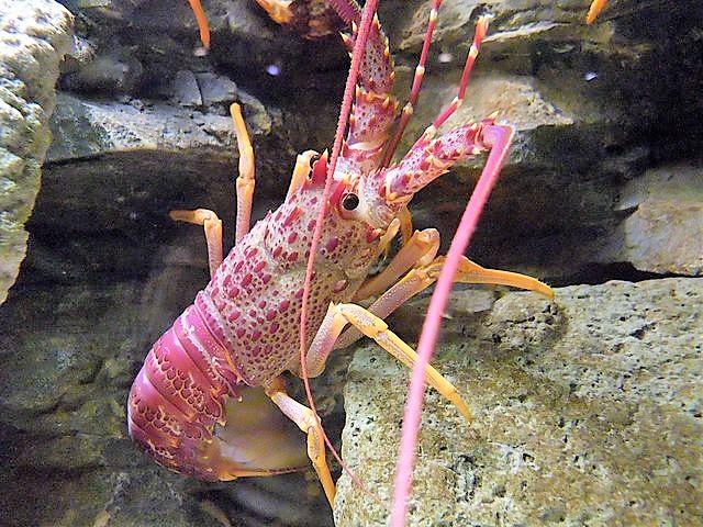 Popular Lobster Names