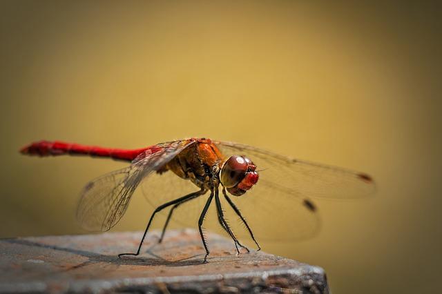 Pretty dragonfly names