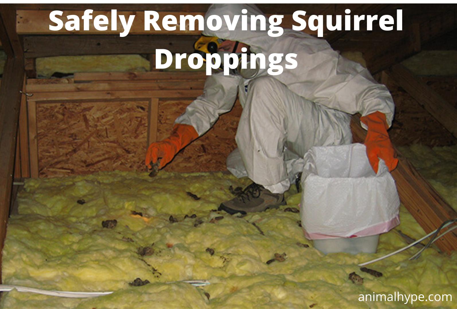 Removing Squirrel Poop