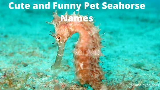 Seahorse Names