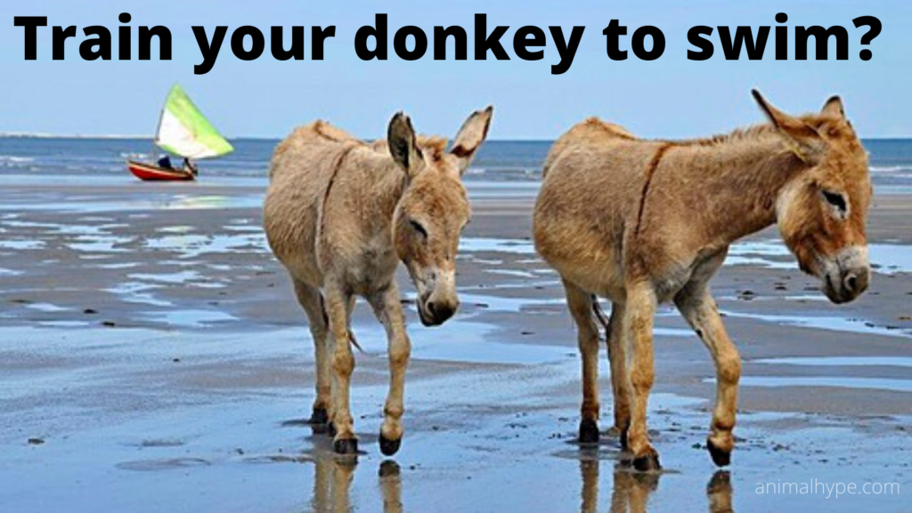 Train your donkey to swim