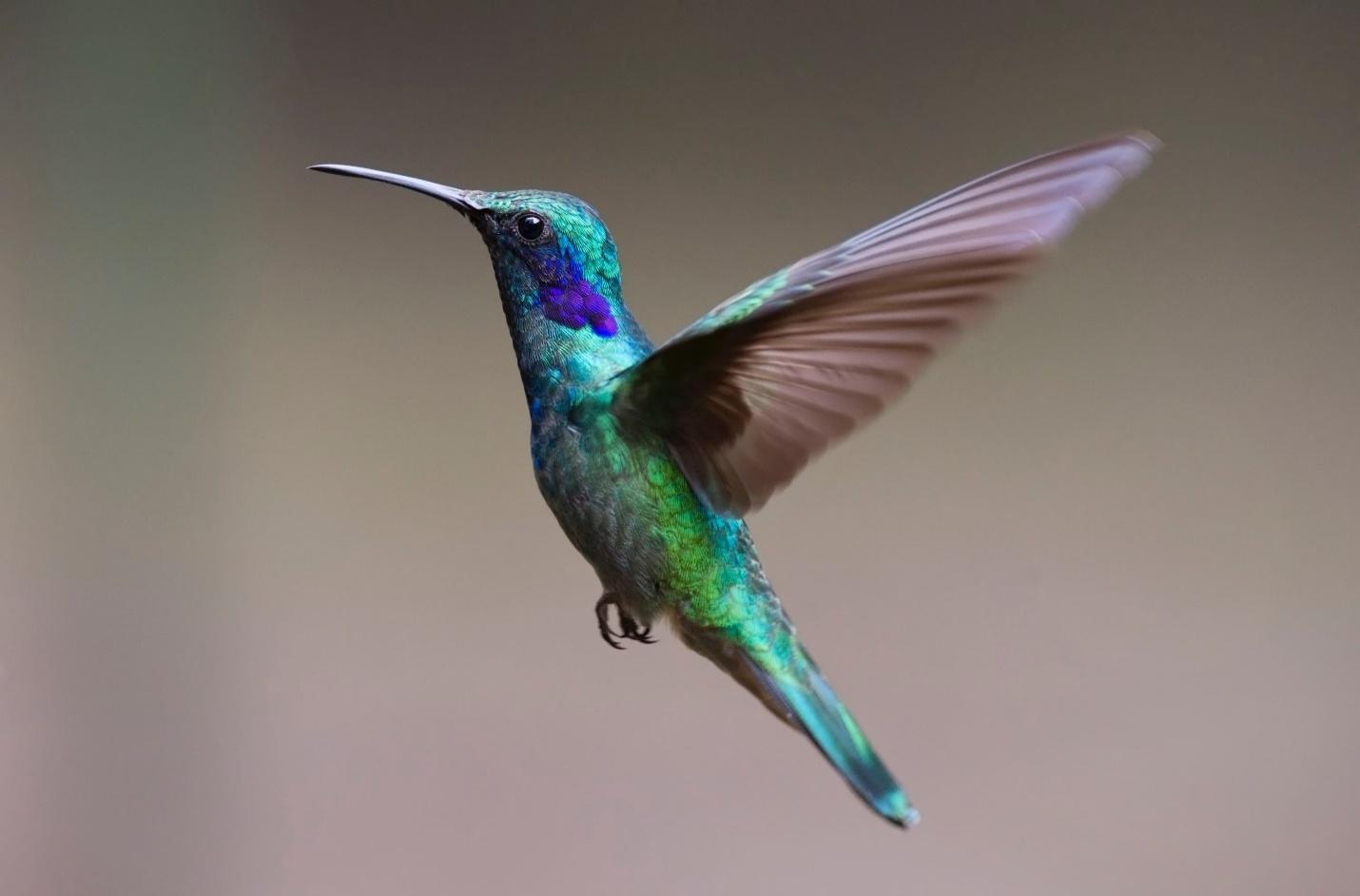 hummingbird names