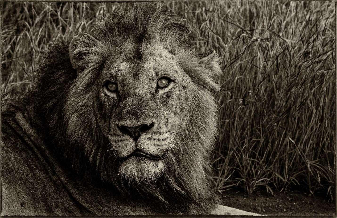 lion names