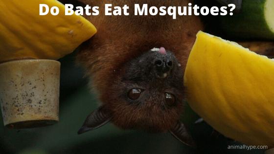 Do Bats Eat Mosquitoes