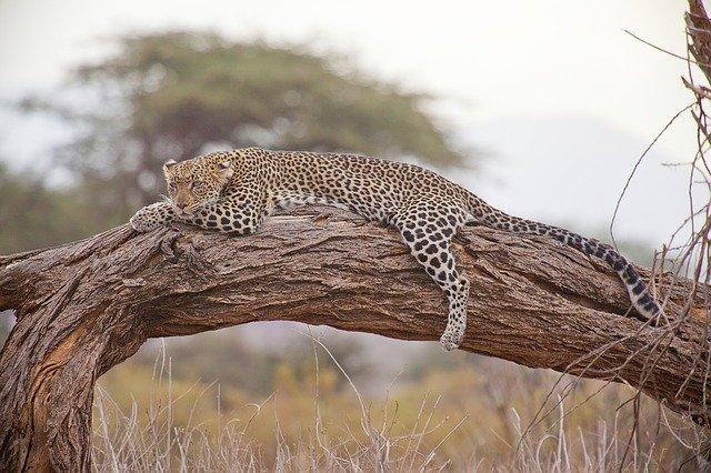 Famous Leopard Names