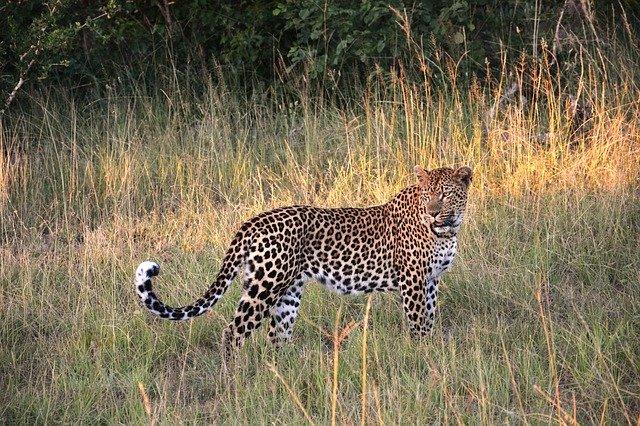 Female Leopard Names