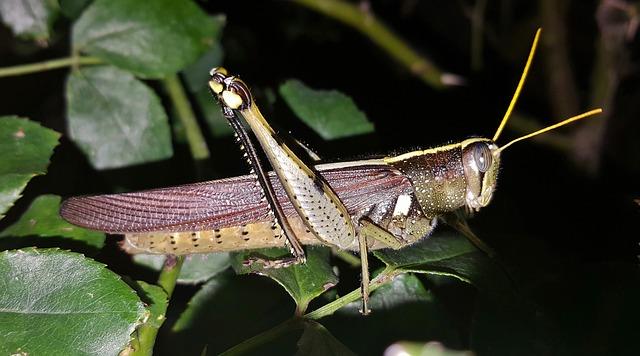 Flying Grasshoppers