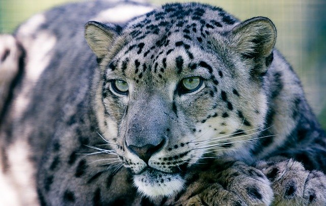 Male Leopard Names