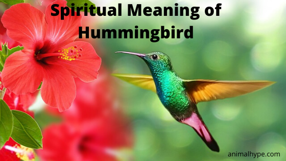 Spiritual Meaning of Hummingbird