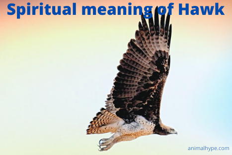 Spiritual meaning of Hawk