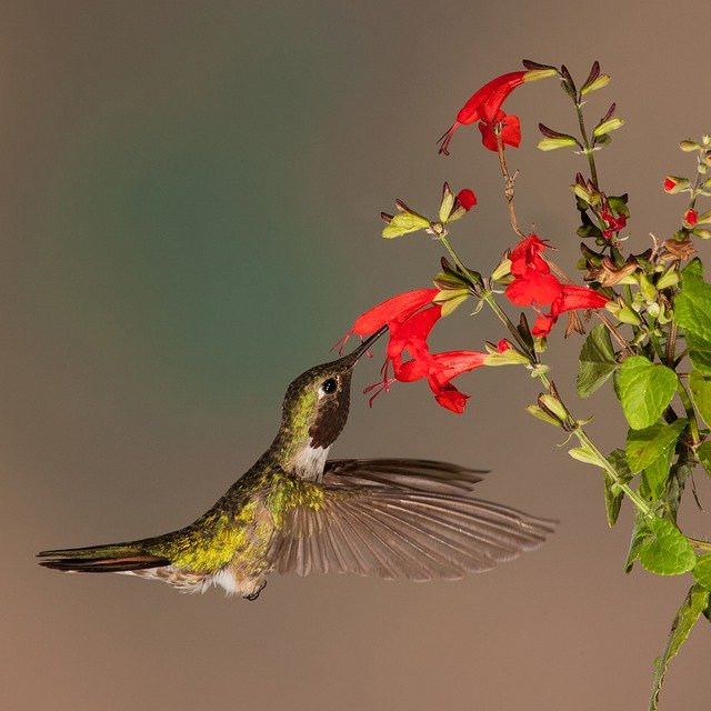 Spiritual meaning of hummingbirds