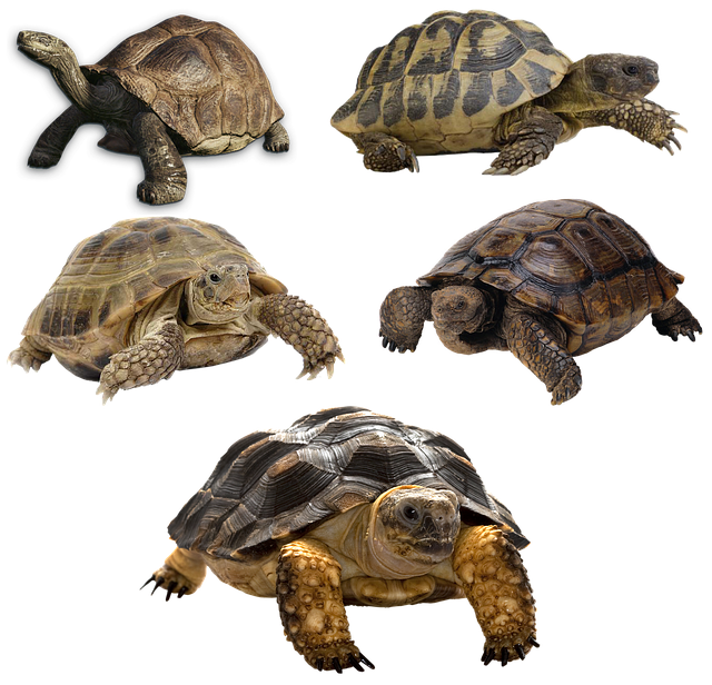 Types of tortoises and their food habits