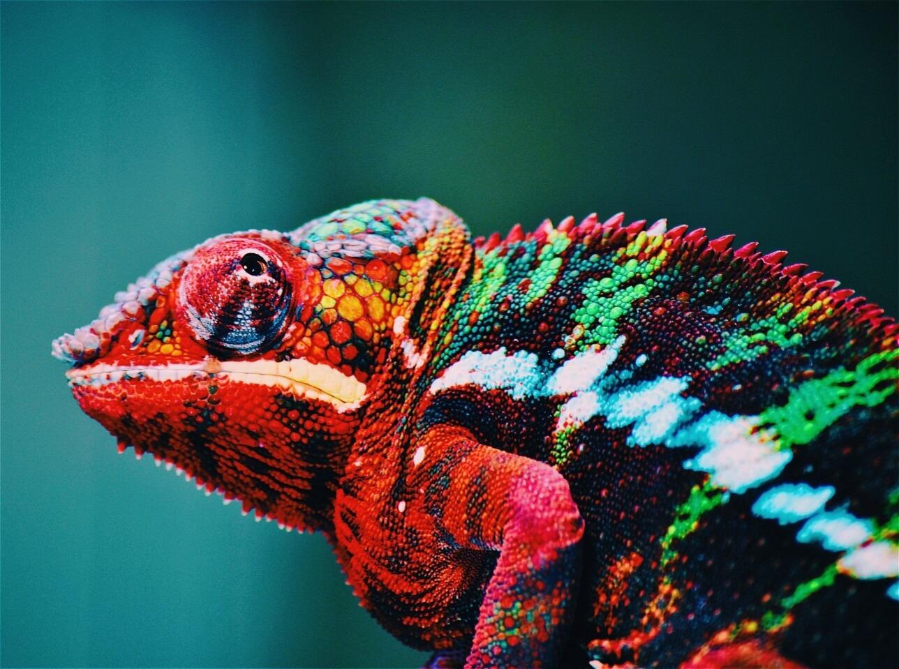 chameleon names