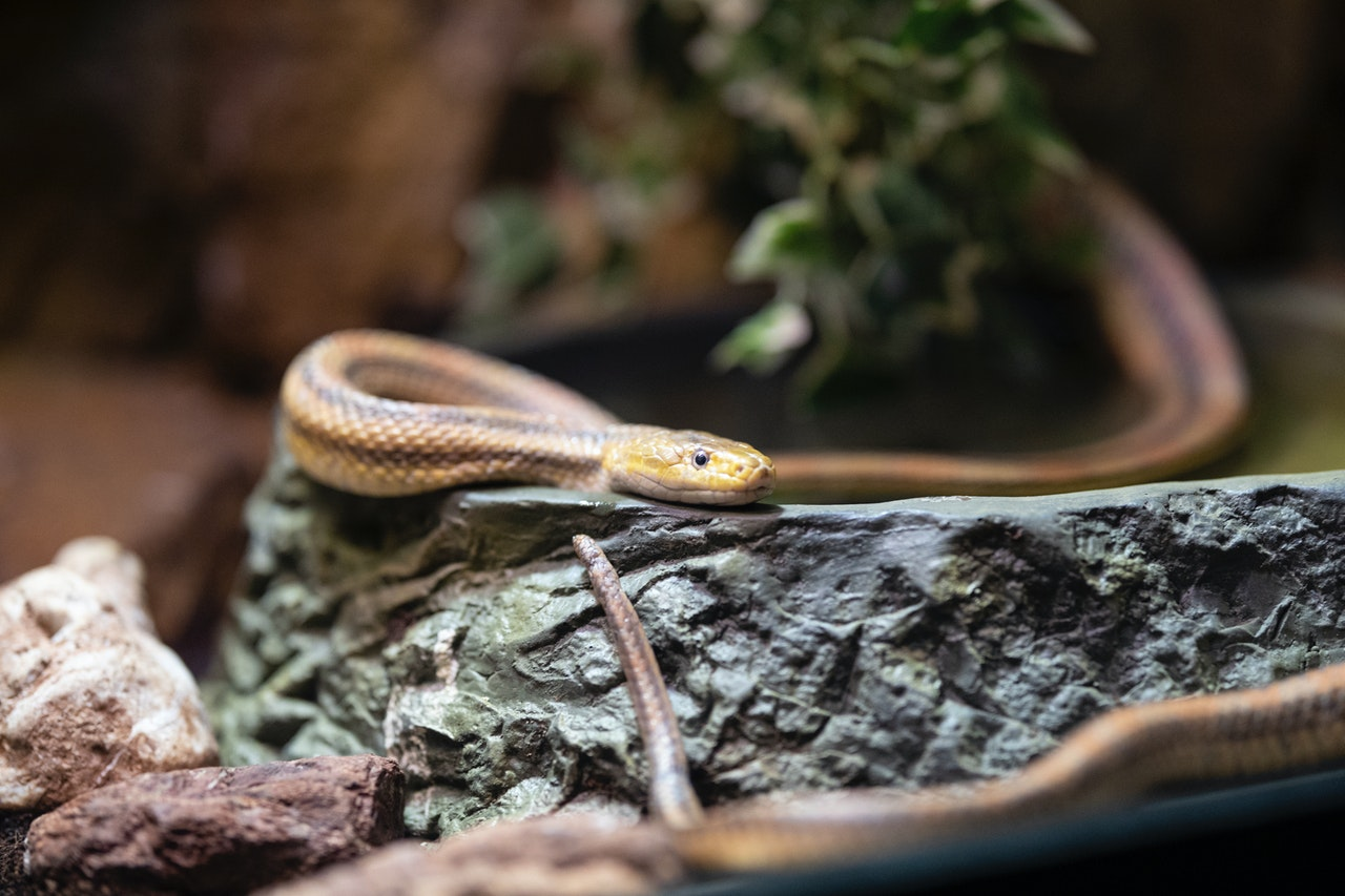 snake names