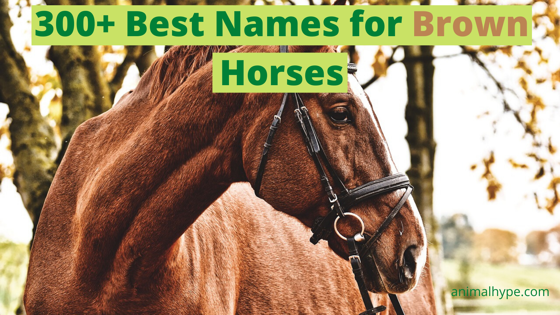 339 Names For Brown Horses Animal Hype