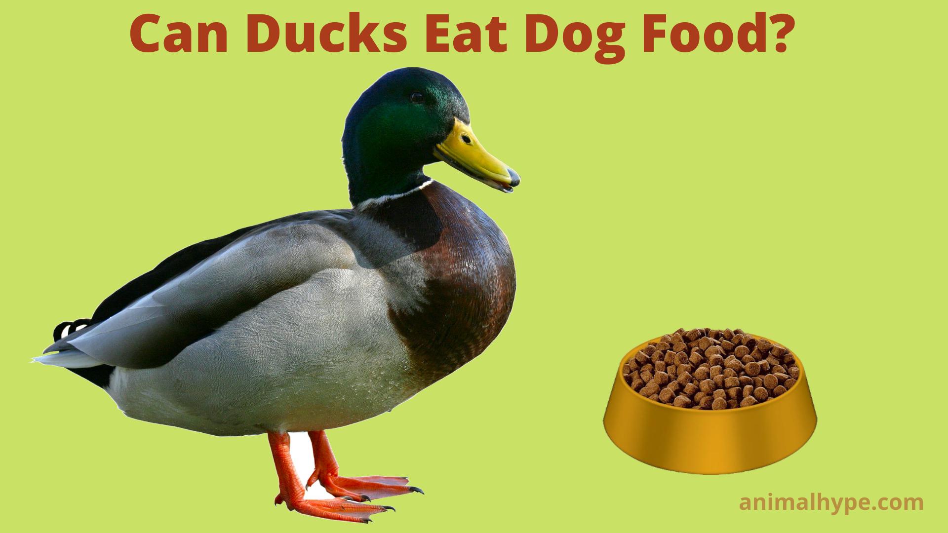 Can Ducks Eat Dog Food